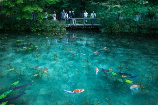 Namonaki Pond (Monet's Pond)